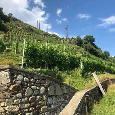 La Valtellina e le sue sottozone: i murelli della Valgella
