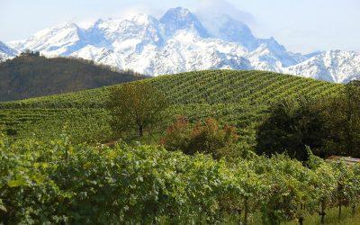 Dal Coste della Sesia al Lessona DOC: i nebbioli dell'Alto Piemonte che guardano il Monte Rosa