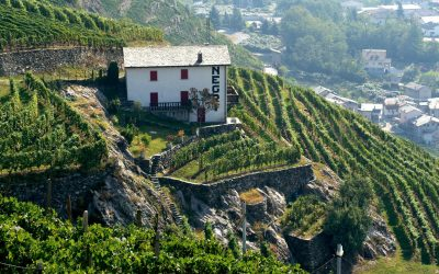 La viticoltura di montagna: in visita alla cantina Nino Negri dove è nato lo Sfursat