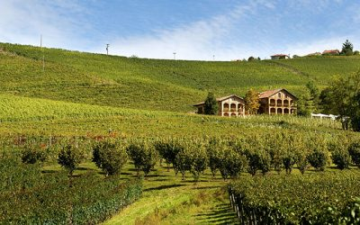 Batasiolo, storico cru della denominazione di Barolo che ha scritto la storia dei Vini Piemontesi