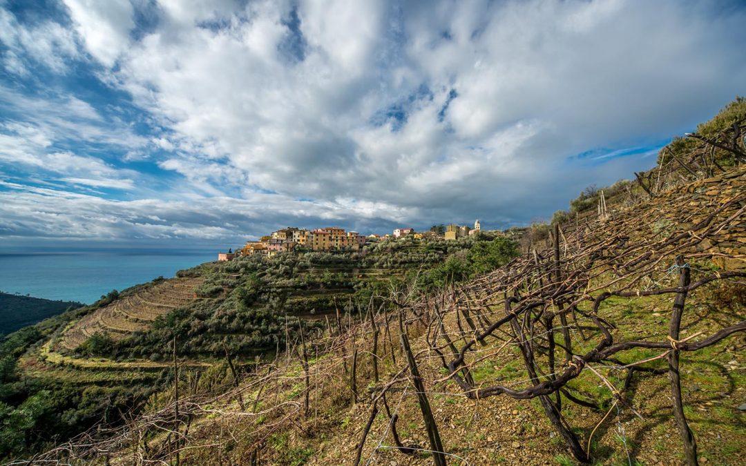 Vigne sospese tra terra e mare: un weekend per assaporare i vini delle Cinque Terre e conoscere il mito dello Sciacchetrà