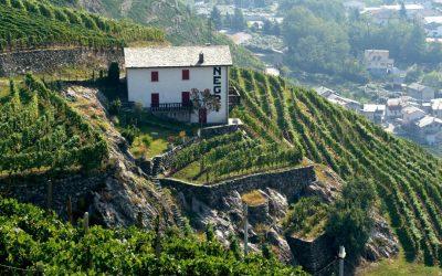 Il trionfo della viticoltura eroica: Sassella, Inferno e Sfursat Nino Negri