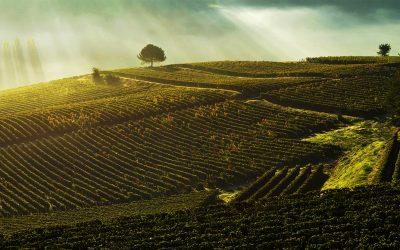 Le sfaccettature del Bordeaux in una Degustazione con Produttore