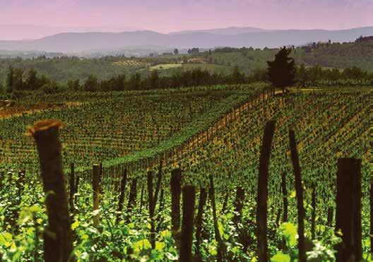 Espressioni dell'Aglianico, il Barolo del Sud Italia