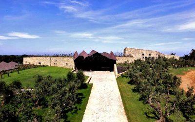 I vini del Re del Barbaresco raccontati da Marco Barbetti