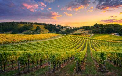 Gli scarti del vino salveranno il mondo
