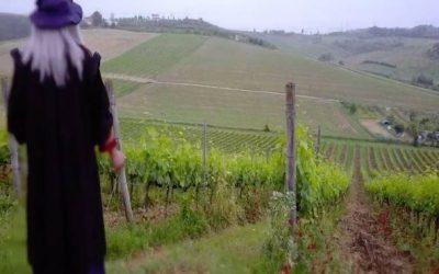 «Suave e odorifero». Il vino di Leonardo rinasce nella sua Vinci