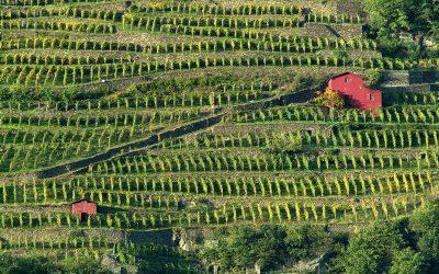 Il Nebbiolo delle Alpi Lombarde: la Valtellina e le sue sottozone