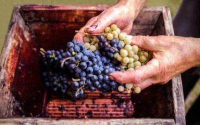Nelle prime società celtiche il vino era per tutti