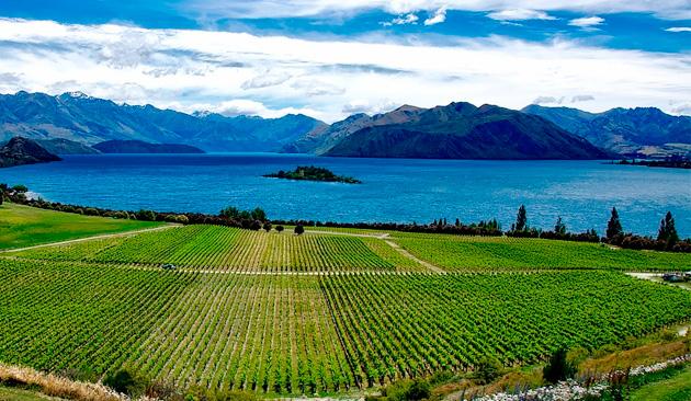 I rossi della Nuova Zelanda: l'ascesa di Pinot Noir e Syrah