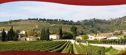 Genealogia di un grande vino