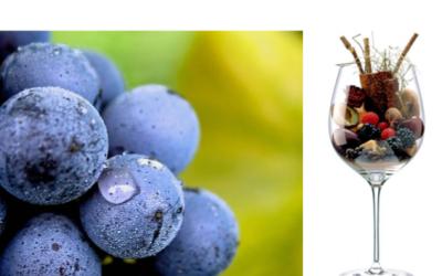 Diamo il Benvenuto al 2021 con due degustazioni dedicate a Nebbiolo e Sangiovese