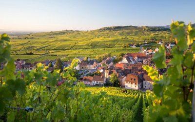 Riesling: i migliori Grand Cru dell'Alsazia