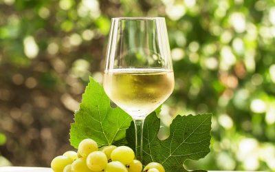 Viaggio in Sud Italia a degustare i Vini Bianchi