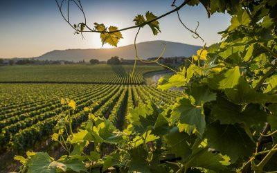 Masterclass Franciacorta Satèn con Slow Wine