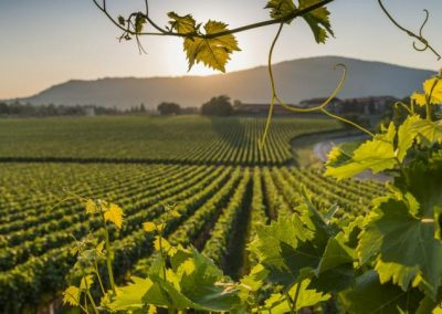 Wine tour Franciacorta