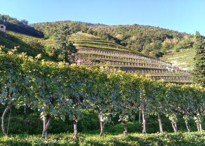 Wine tour Nebbiolo delle Alpi