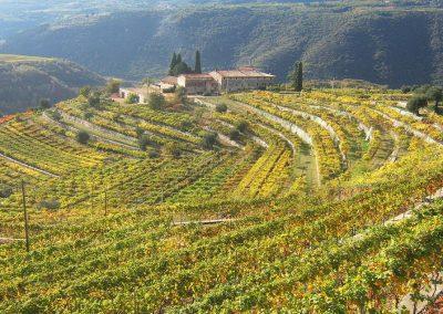 Wine tour Amarone della Valpolicella